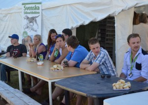 Kristjan Domander, Jennie Sundberg, Natalie Larsson, Linus Knapp, Mattias Sundberg, Erik Andersson och Anders Holmberg (Foto Leif Aronsson)