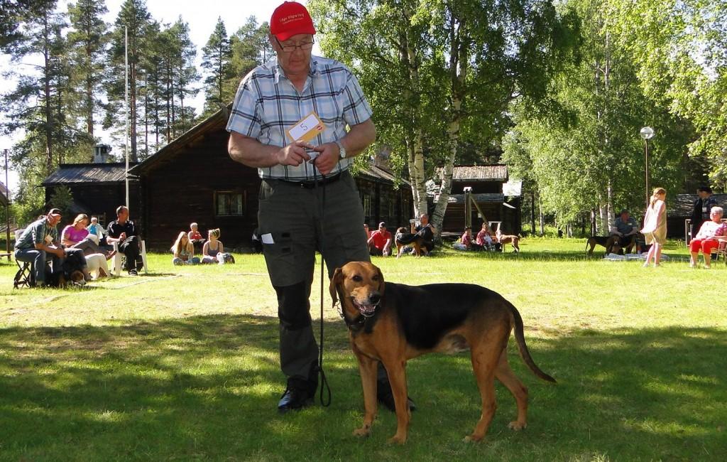 Schillerstövare Rasvård Iremarkens Raiko-06, E Jkl 2 Jkk CK 2 Bhkl R-Cert, och Anders Dunder