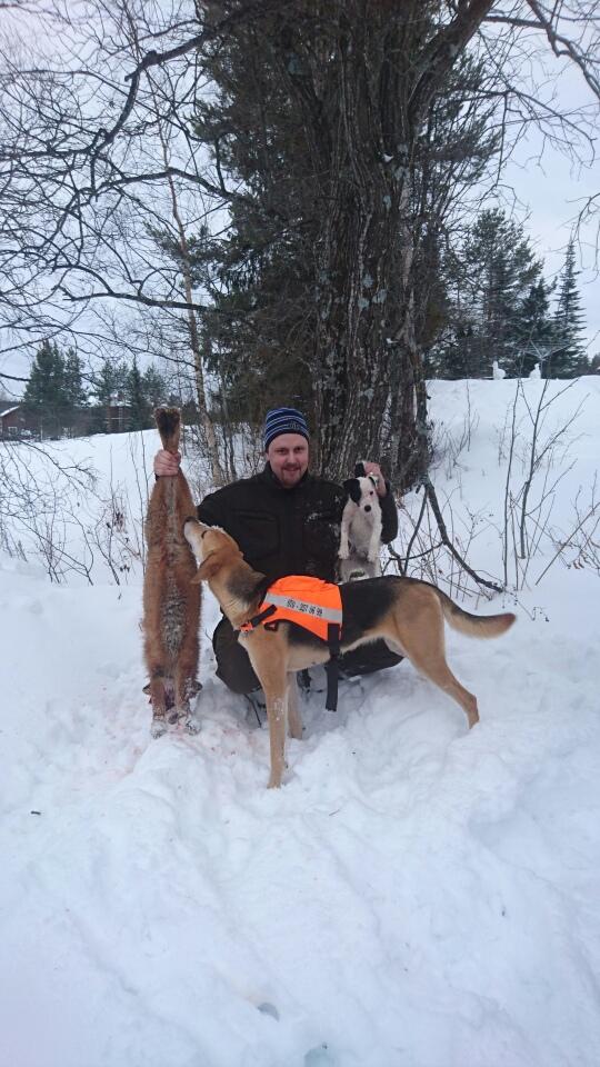 Henrik karlsson med Rysstövarn och terriern. Hundförare och skytt på andra räven på lördagen.