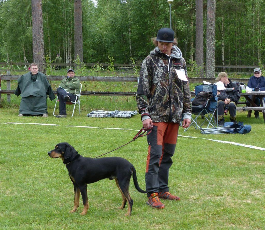 Joakim Lindkvist från Sveg med sin smålandsstövare Barsjötorps Curry som främst används som rovdjursstövare och har varit med när 5 björnar skjutits