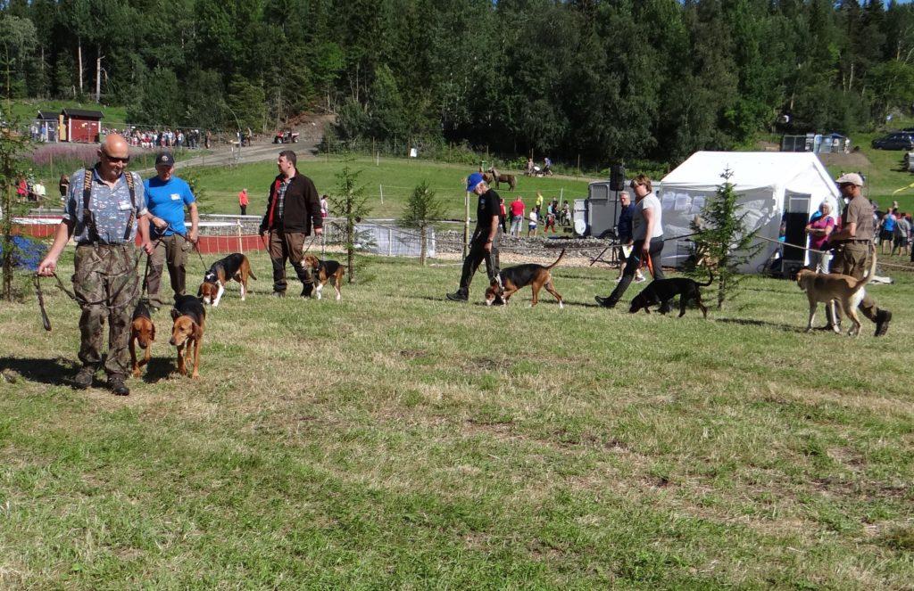 Rasparaden med stövare, 2 schillerstövare, 2 finska stövare, hamiltonstövare, slovensk kopov samt rysk stövare